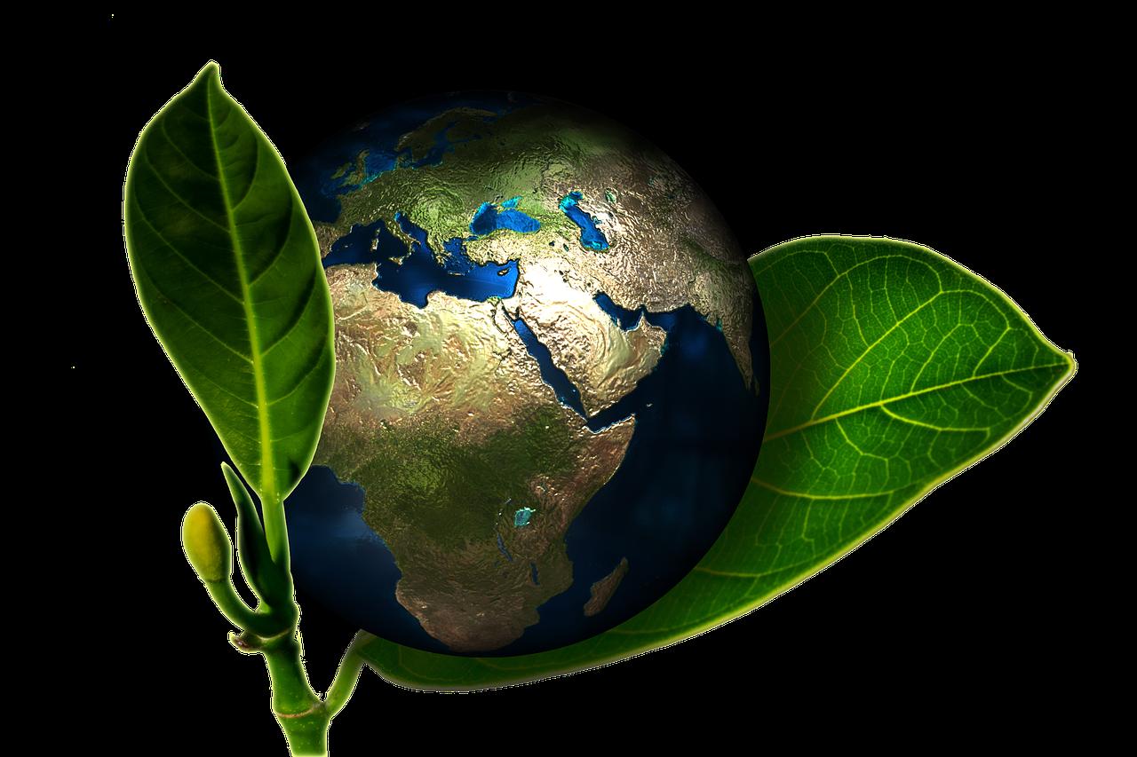 Miljø venlig og digital skrotningsprocesser
